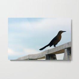Bird collection _ 01 Metal Print
