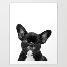 Black and White French Bulldog Art Print