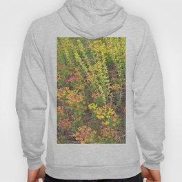 Spring meadow Hoody