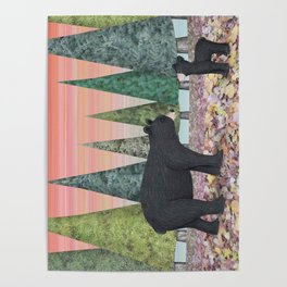 black bears & evergreens Poster