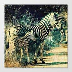 Zebra Pair Canvas Print