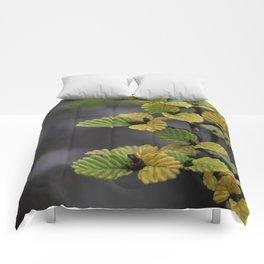 Fagus Comforters