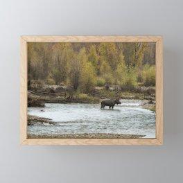 Moose Mid-Stream - Grand Tetons Framed Mini Art Print