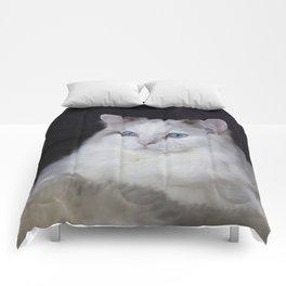 Ragdoll Cat Her Majesty Comforters