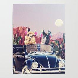 Llamas on the road Poster