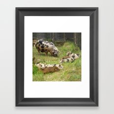 Kunekune Pigs Christmas Greeting Framed Art Print