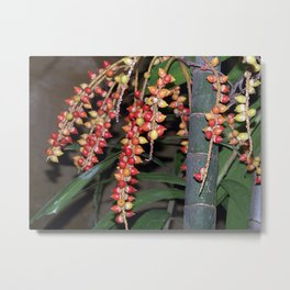 coffee plant (Bali, Indonesia) Metal Print
