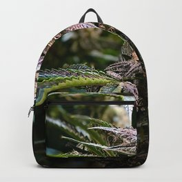 Purple Cannabis Bud in Black Backpack