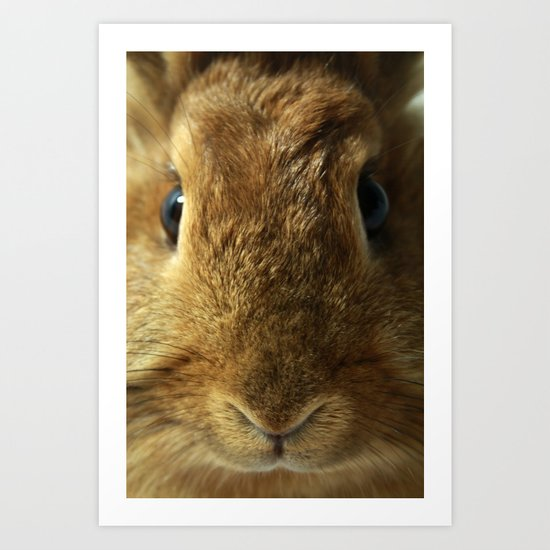 Little Rabbit. Art Print