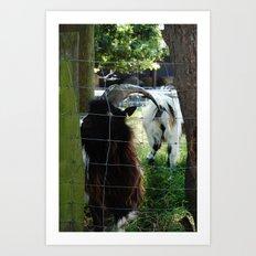 Hadleigh Farm 2 Art Print