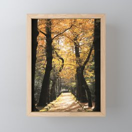 Ginkgo biloba trees Framed Mini Art Print