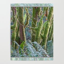 YOUNG RAINFOREST MAPLES Poster