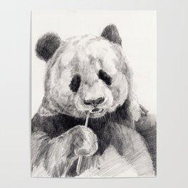 Panda black white Poster