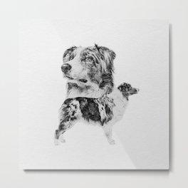 Australian Shepherd dog - Aussie pencil sketch Metal Print