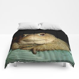 A Common Toad With Philosophical Disposition Comforters
