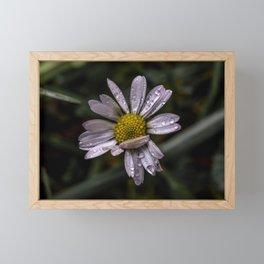 Rainy daisy Framed Mini Art Print