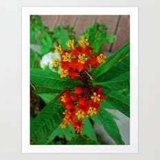 Orange and Yellow Flowers Art Print