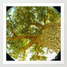 treeshade Art Print