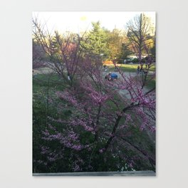 Afternoon in Central Park Canvas Print