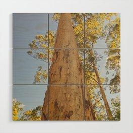 Eucalyptus Wood Wall Art