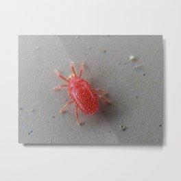 red mite Metal Print