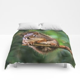 Who, Me? A Saucy Red Squirrel Comforters