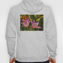 lily Hoody