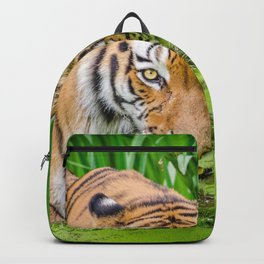 Fantastic Majestic Big Jungle Tiger Walking Through Swamp Close Up Ultra HD Backpack