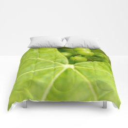 Maturing wine grapes Comforters
