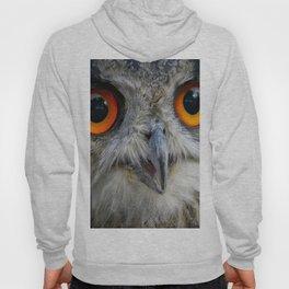 Owl Close up Hoody