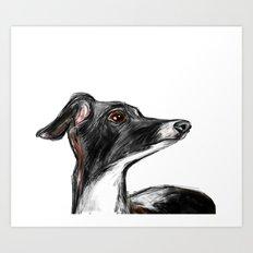 Italian Greyhound Art Print