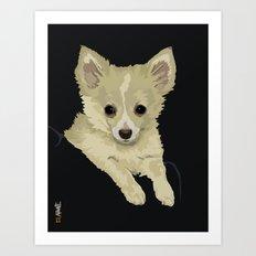 Long Hair Chihuahua Art Print