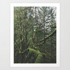 Moss Covered Trees Art Print