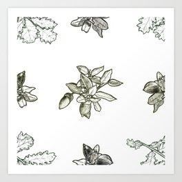 Quercus (big) Art Print