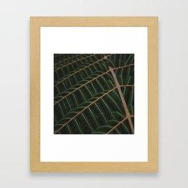 Fern 4 Framed Art Print