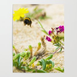 the flight of bumble bee on the bunes Poster