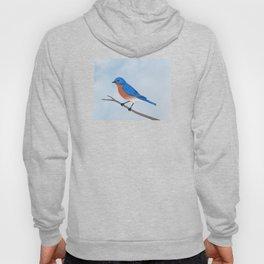 male eastern bluebird portrait Hoody