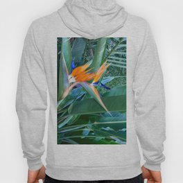 Birds of paradise Hoody