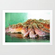 Sunflower Sea Star Art Print