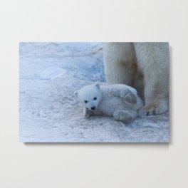 Polar bear family on snow close-up. Metal Print