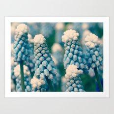 Muscari Field  - JUSTART © Art Print