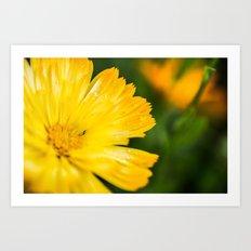 Macro Yellow Flower Art Print