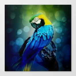 Macaw on branch Canvas Print