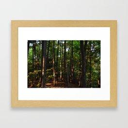 Forest // Sunset Effect Framed Art Print