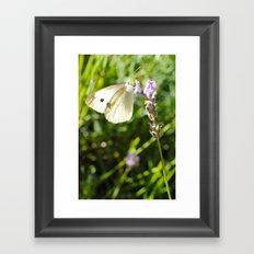 Opaque Butterfly Framed Art Print