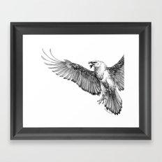 Lammergeier Framed Art Print
