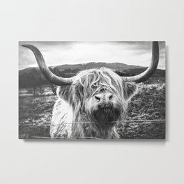 Highland Cow Nose Barbed Wire Fence Black and White Metal Print
