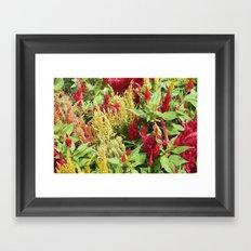DC Flowers Framed Art Print