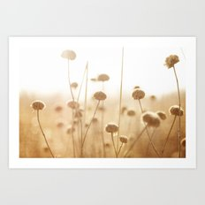 field of light Art Print
