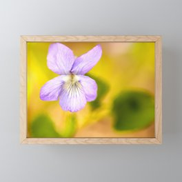 Wildflower Pansy Summer Blossom #decor #society6 #buyart Framed Mini Art Print